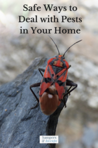 Safe Ways to Deal with Pests in Your Home red beetle insect on stone hampersandhiccups