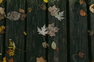 Backyard Decking - leaves on a wooden deck