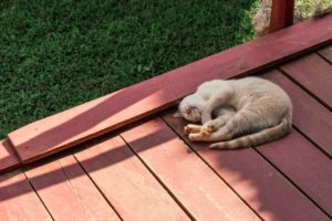 Happy home decor improvements cat sleeping on a new deck in backyard