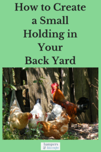 How to Create a Small Holding in Your Back Yard flock of hens and a rooster in a backyard near the fence hampersandhiccups