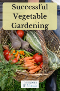 Successful Vegetable Garden - vegetables from gardening season in a basket hampersandhiccups