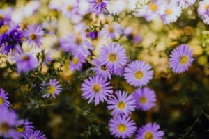 Horticultural Hacks purple yellow and white garden flowers