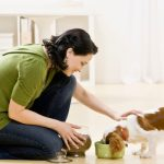 feeding-quality-dog-food