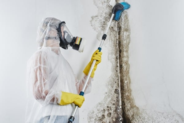 professional-disinfector-in-overalls-processes-the-walls-from-mold