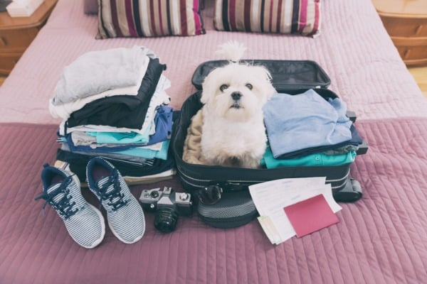 dog sitting in the suitcase picture id525226456