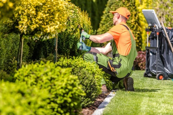 garden worker trimming plants