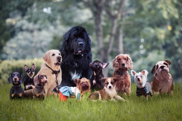 many different breeds of dogs