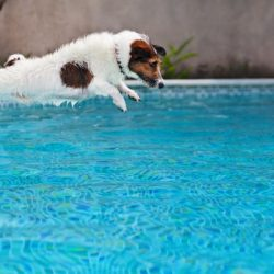 pool safety for dogs